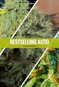 Best autoflowering Seeds of 2019